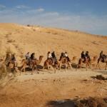 טיול גמלים בנגב